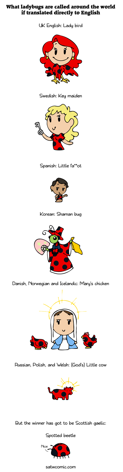 Ladybug around the world satwcomic.com